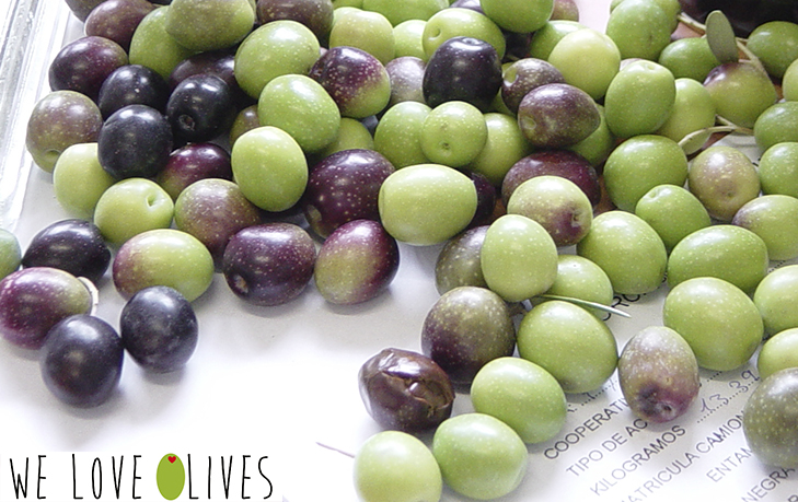 Do you know that the olives changes of color?